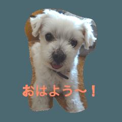 私の犬の挨拶スタンプ