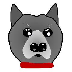 甲斐犬ランちゃん