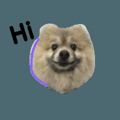 かわいい犬犬