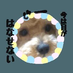 ジュラ坊の【愛犬家が使いやすい】スタンプ