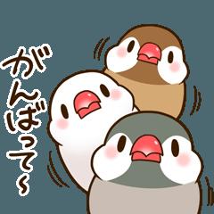 ぷくぷく文鳥~日常編~