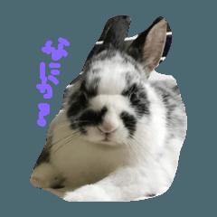 癒しされてウサギ