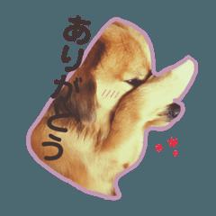 ミックス犬ベイク⑵