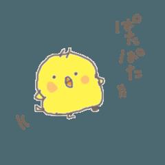 Rippi Chick