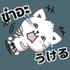 タイ語と日本語日常会話で使う基本の言葉