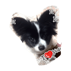愛犬ちゃま