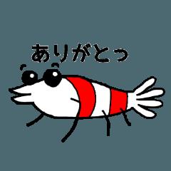 水辺の生き物シリーズ(シュリンプと・・)