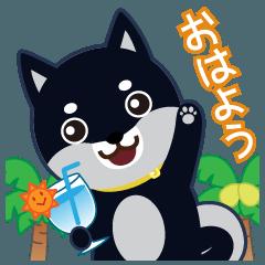 柴犬「ムサシ」19 コジロウ