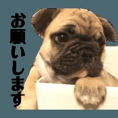 愛犬スタンプ01