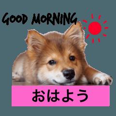 癒し犬ココ 家族の会話