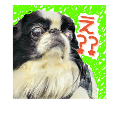 保護犬卒業生 むーんちゃんの日常スタンプ