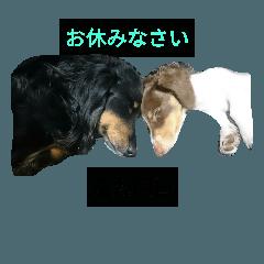 ほっこり愛犬スタンプ