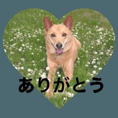 愛犬あいちゃんのかわいいスタンプ