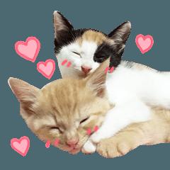 可愛い子猫むう&ちょこの写真スタンプ