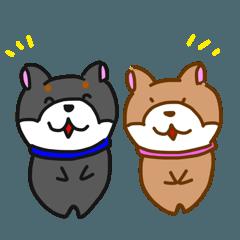 柴犬ルナ3