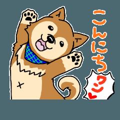 ☆柴犬リクのスタンプ☆