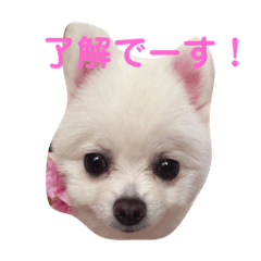 愛犬ななちゃん♡