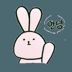 毎日韓国ウサギ