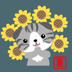 キュン猫スコちゃんの夏