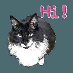 たぬき?もっぷ?いえいえ猫のMocoです!