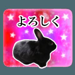 [LINEスタンプ] 実写の黒ウサギとライオンラビット★宇宙柄