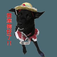 ハッピー台湾の犬