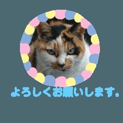 [LINEスタンプ] 毎日猫舎