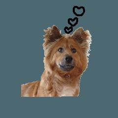 野犬のヤマトさん PART 2