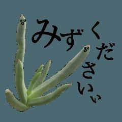 多肉植物とサボテンの言葉