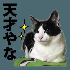 音(おん)ちゃん猫スタンプ☆大阪弁【写真】