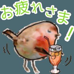 小鳥の日常会話2