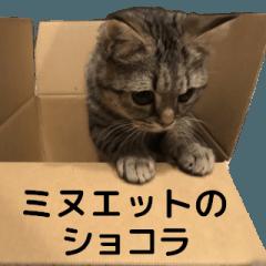 ミヌエットのショコラの子猫写真スタンプ5