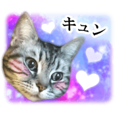 [LINEスタンプ] 宇宙柄のハイパー猫ちゃん★実写