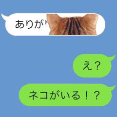 メッセージにちょっかいを出す猫