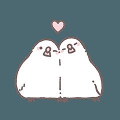 幸せの白い文鳥