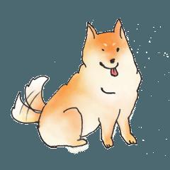癒し系しば犬 コロちゃん (毎日使えるver.)
