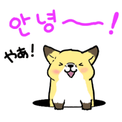 動く▷きつねさんの韓国語