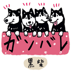 Every Day Dog 黒柴2