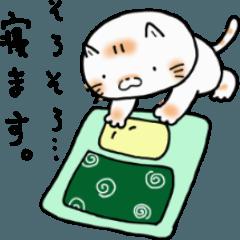 平凡が一番な猫達