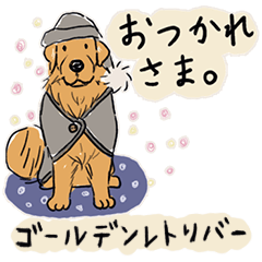 Every Day Dog ゴールデンレトリバー1