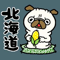 北海道のパグさん