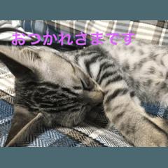 猫のごまちゃんスタンプ