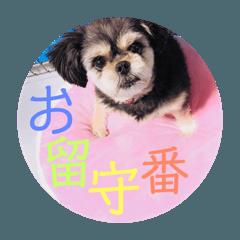 犬/翔太郎/しょーちゃん