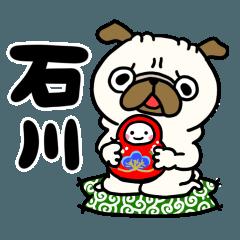 石川のパグさん