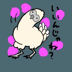 にわとり(たとえば烏骨鶏)