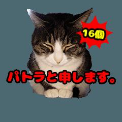 パトラと申します。写真猫スタンプ