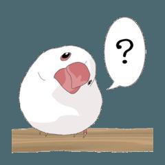 癒し生活 [文鳥]