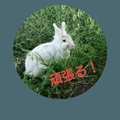 おさんぽ萌えウサギ