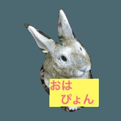 オリジナルウサギスタンプ