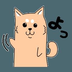 にょきにょきアニマル's 柴犬編